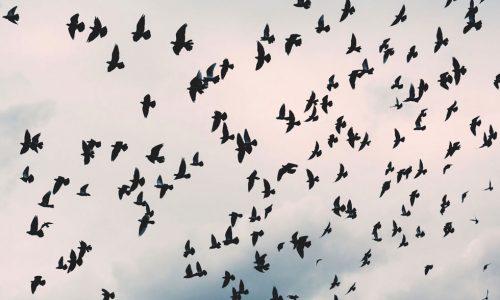 Tipps & Tricks: Vogelfutter unter der Lupe
